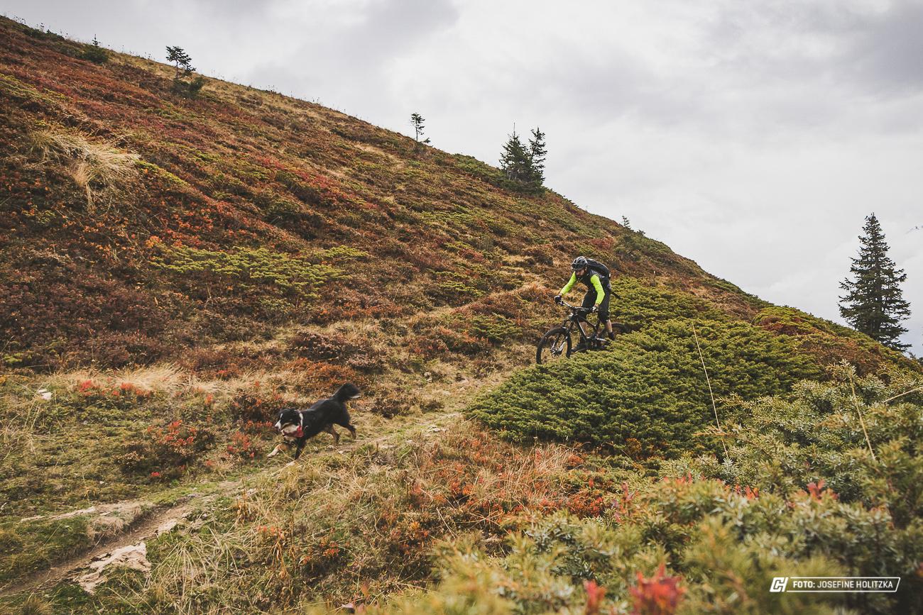 Grindelwald kuba2 1